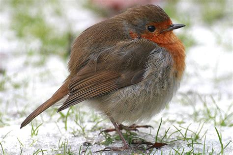 is it possible for birds to get fat
