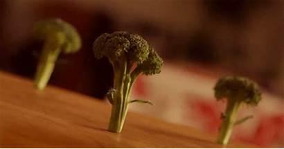 Vegetables Fresh Veggies Broccoli Eating Taste Start