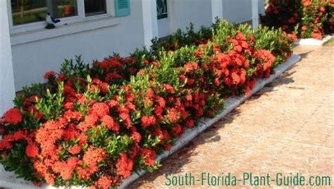 Garden Decorative Bushes by Small Shrubs
