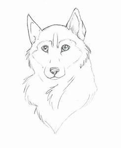 Husky Drawing Free Download On Ayoqqorg