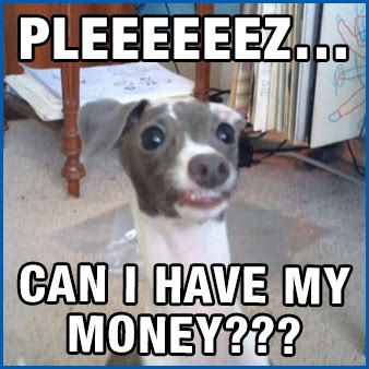 Pay Me My Money Meme - funny reaction dog gif shared by fordreri on gifer