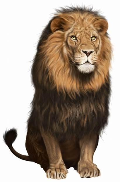 Lion Transparent Clip Clipart Animals Yopriceville Previous