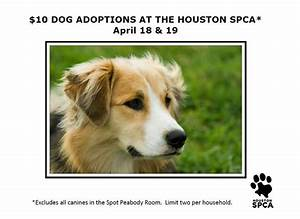 This Weekend At The Houston Spca We Have Many Dogs