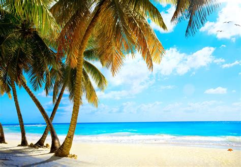 summer palms vacation tropical sea paradise ocean wallpaper 4760x3304 424378 wallpaperup