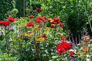 Rosen Für Balkon : rosen im k bel auf balkon und terrasse ~ Michelbontemps.com Haus und Dekorationen