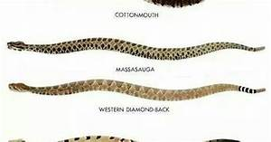 Kind Of Rattle Snakes