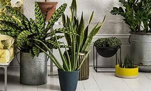 Pflanzen Die Wenig Licht Brauchen Heißen : sch ne zimmerpflanzen so dekorieren sie ihr zuhause mit ~ Lizthompson.info Haus und Dekorationen