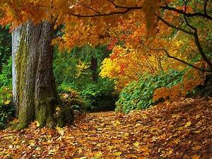 5 Temperate Forest Fun Facts