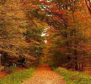 schöner Wald so im Herbst Foto  Bild  jahreszeiten herbst digitale fotos Bilder auf
