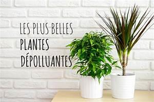 Plante D Intérieur : les plus belles plantes d 39 int rieur d polluantes album ~ Dode.kayakingforconservation.com Idées de Décoration