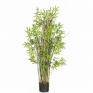 Palms, Bamboo cambodiaplants