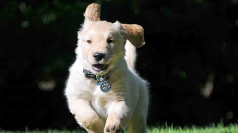 full hd wallpaper dog run amusing blurry desktop