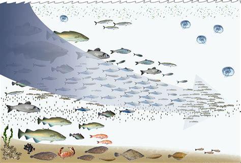 Fishing Down The Food Web Wikipedia