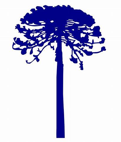 Vector Araucaria Svg Tree Commons Wikimedia Icons
