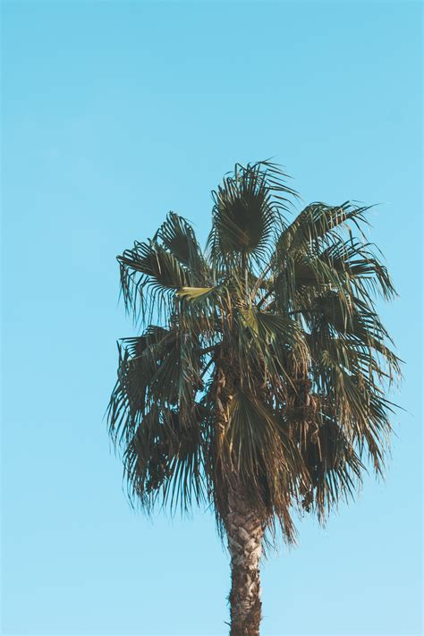landscape photography   coconut trees  stock photo