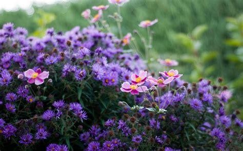 Littlebug 365 ภาพน่ารัก วอลเปเปอร์มือถือ: วอลเปเปอร์ ...