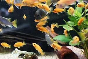 Fische Aquarium Hamburg : herzlich willkommen fische ~ Lizthompson.info Haus und Dekorationen