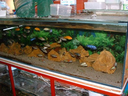 comment nettoyer les decors d aquarium entretien d aquarium eau douce divers aquarium webzine l aquariophilie d eau douce et d