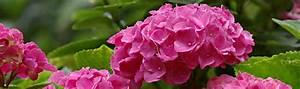 Pflanzen Im Schatten : pflanzen f r den standort schatten und halbschatten im garten ~ Orissabook.com Haus und Dekorationen