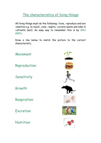 biology y7 worksheet characteristics of living things