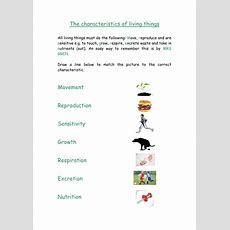 Biology Y7 Worksheet  Characteristics Of Living Things And Cells By Sslynne  Teaching Resources