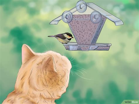 Keep Cats In Backyard by 3 Modi Per Tenere I Gatti Lontano Dal Tuo Giardino