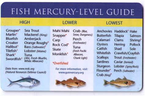 mercury  fish pellets shift  environment fly fisherman