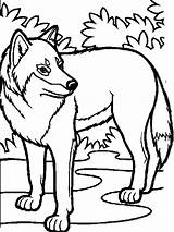 Coloring Wolf Pack Printable Realistic sketch template