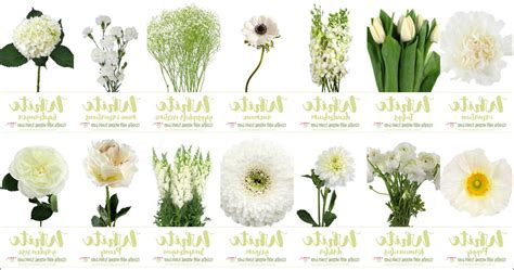 white types 92 types of white flowers for weddings 100 types of flowers weddings top 25 best september