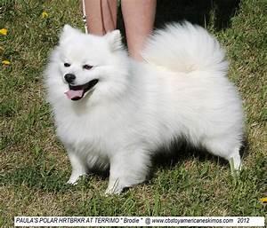 American Eskimo Dog Toy Size