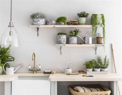 Plants To Liven Up Your Kitchen