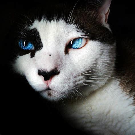 Comment Se Débarasser Des Puces Chez Les Chats
