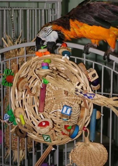 10 Most Simplest Ideas Of Diy Toys For Macaws
