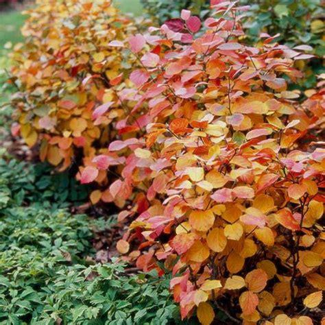 autumn garden plants 10 best plants for your autumn garden
