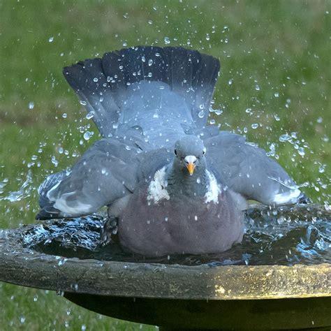 coniston bird bath rspb bird baths rspb shop