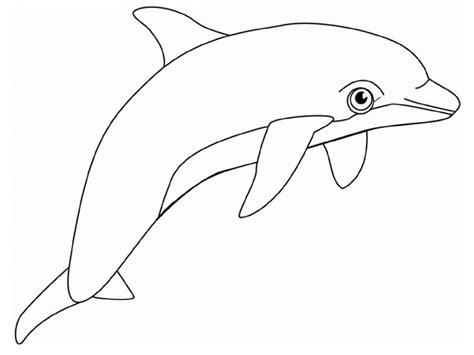dolphin   clip art  clip art