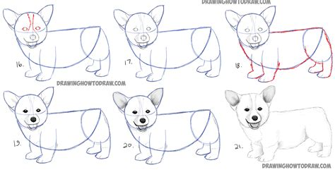 draw  corgi puppy easy step  step realistic