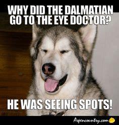 Dog Doctor Meme - dogs funny dog photos on pinterest dog jokes funny dog photos and dog memes