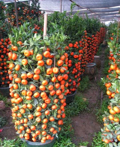 Vertical Garden Construction by How To Make A Simple Minimalist Vertical Garden