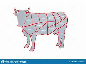 Cow And Cut Of Beef Or Beef Chart  Diagram Of Different