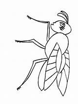 Fly Coloring Printable Animals Fliege Ausmalbilder Malvorlagen Ausdrucken Kostenlos sketch template