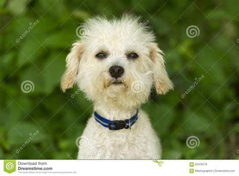 Funny Dog Face Stock Photo - Image: 62478179