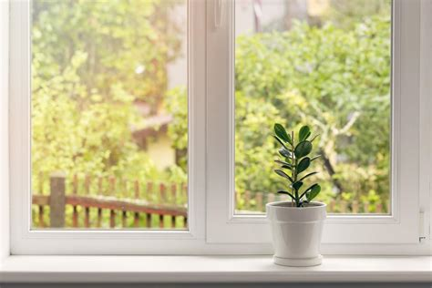 The Windowsill by Jade Plant Care