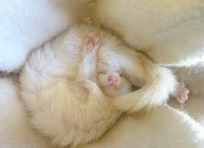 Image result for Cute Baby Animals Sleeping