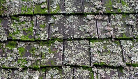 Roof Cleaning And Maintenance Tips