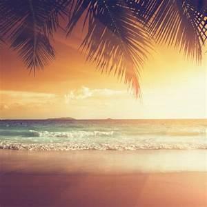 Bilder Meer Strand : aludibond sonnenuntergang am strand in der karibik wandbilder aludibond bilder strand meer 50 ~ Eleganceandgraceweddings.com Haus und Dekorationen