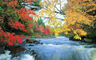 Fall Desktop Foliage Wallpapers Leaves Cave