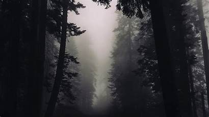 Gothic Forest Chromebook Wallpapers Laptop Uhd