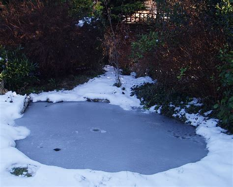 winter pond maintenance pond stars uk