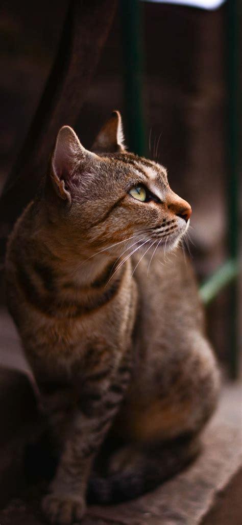 cute cat iphone wallpapers cat  shirt store